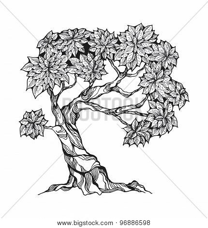 Gnarled tree with leaves