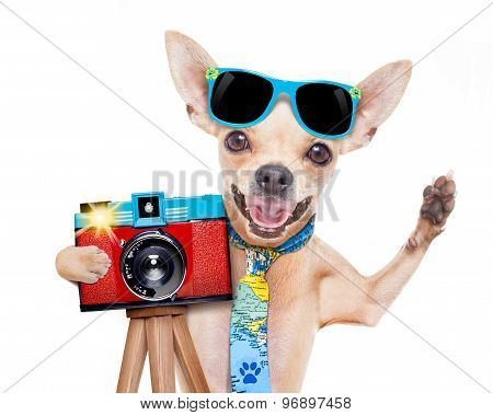 Photographer Dog Camera