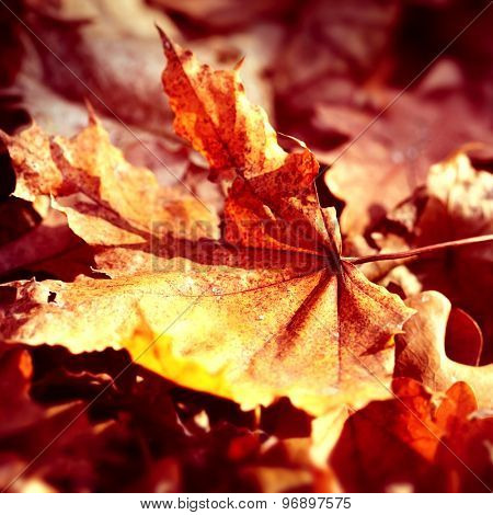 dry autumn leaf in  forest