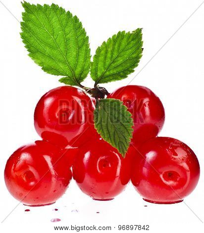ripe cherries , isolated on white background