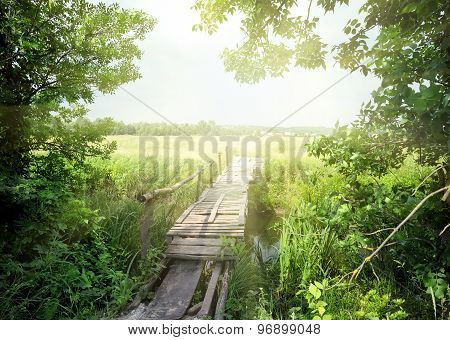Wooden bridge through the trees