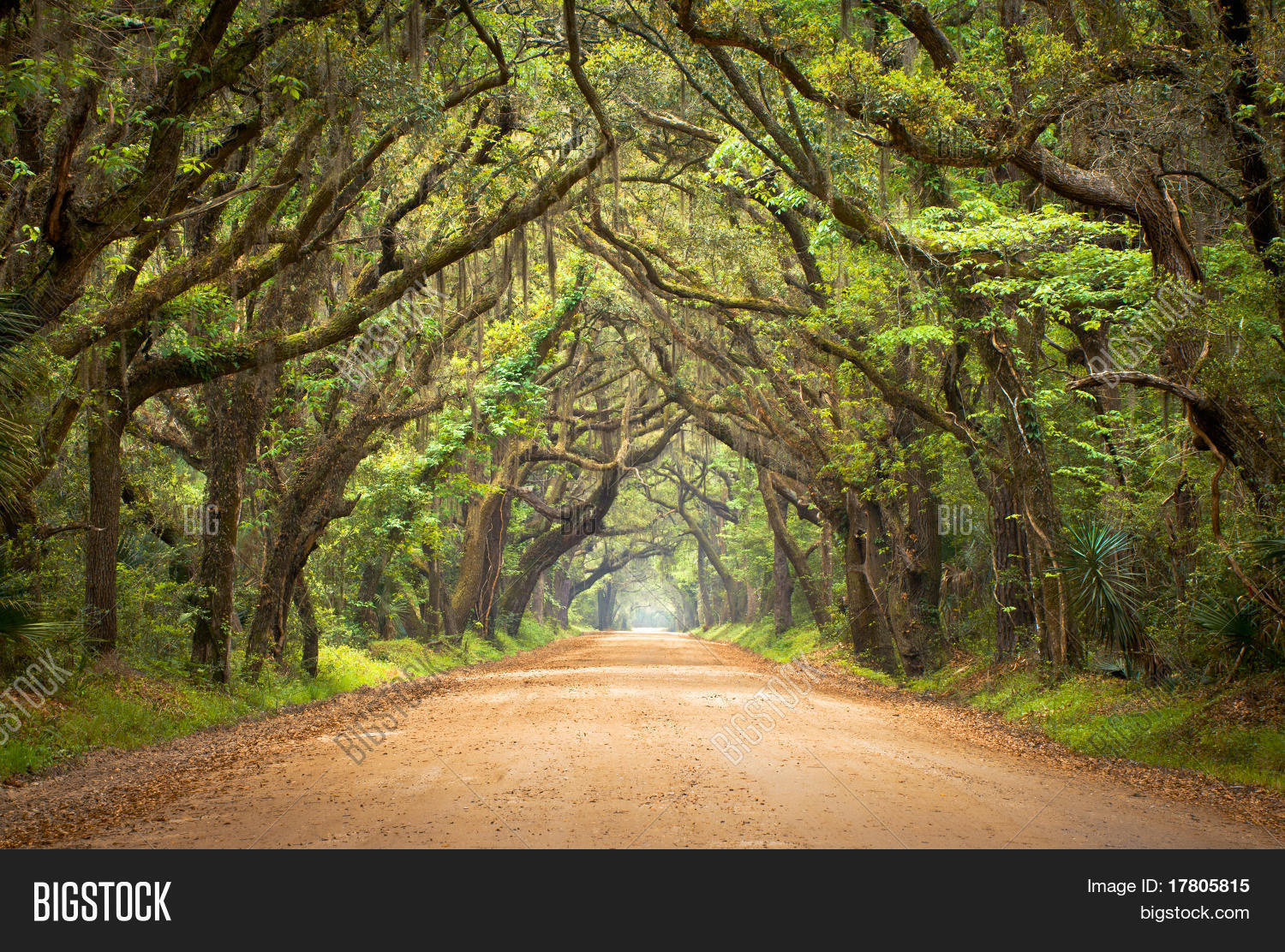 botany bay spooky dirt road creepy image amp photo bigstock