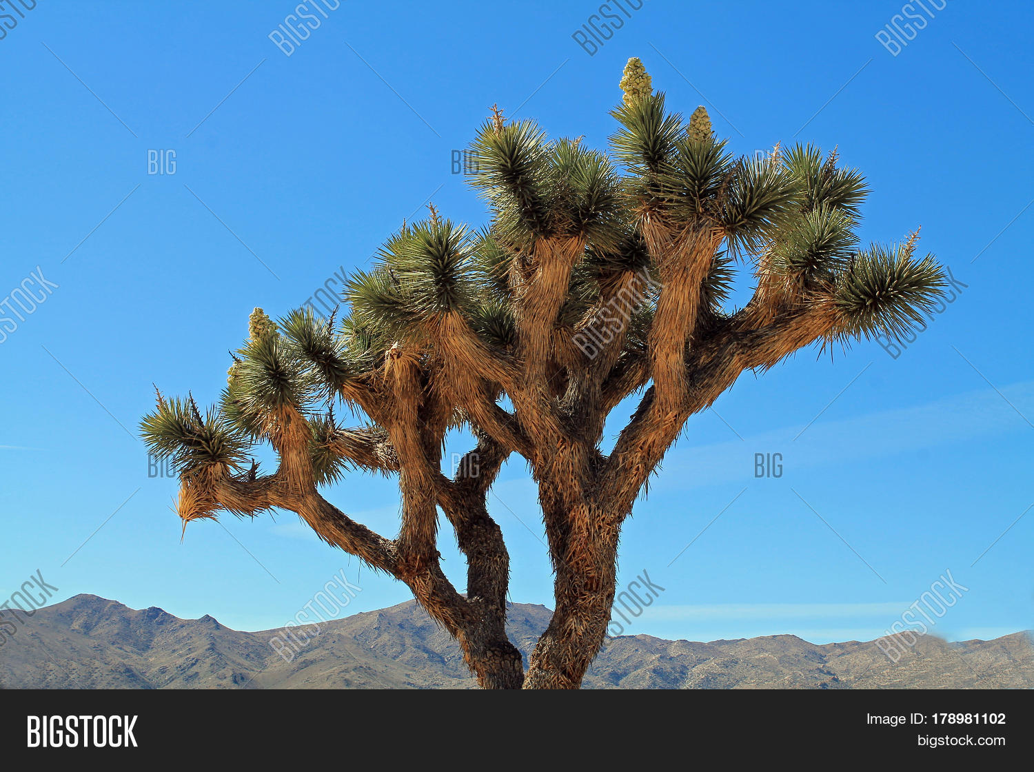 joshua tree buddhist singles The joshua tree is the fifth studio album by irish rock band u2 it produced the hit singles with or without you, i still haven't found what i'm looking for.