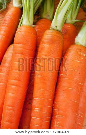 Carrot - Close Up View