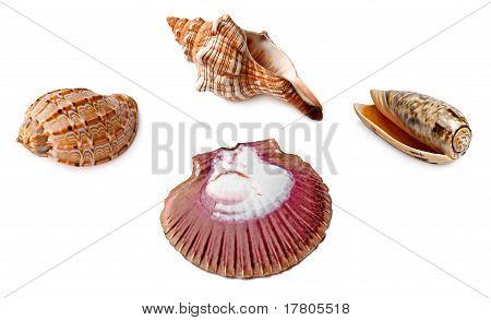 Some Isolated Seashells