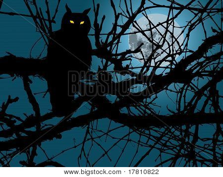 Owl In Night