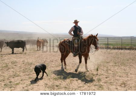 Cowboy And Horse And Dog