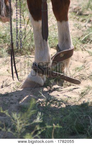 Cowboy Hobbles