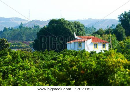 Fruit farm small holding nestling in the foothills of the Monchique mountains