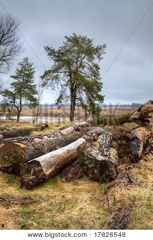 Landscape With Logs