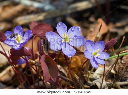 Flowers Of Early Spring