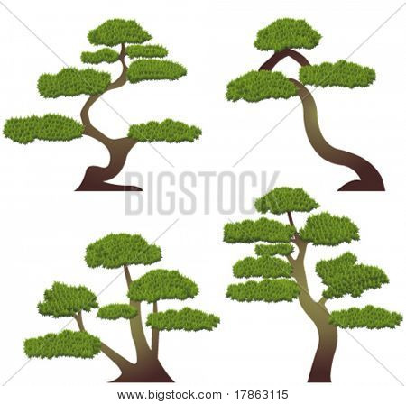 Bonsai tree collection. Vector
