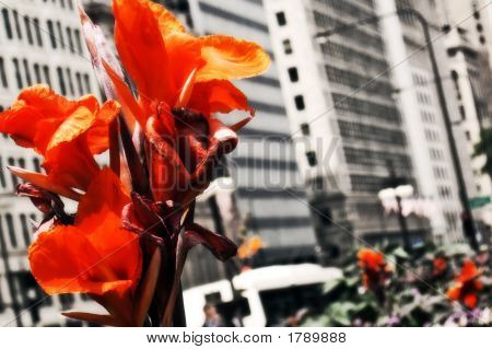 City Flowers 3