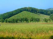 picture of swales  - Summer scene rural landscape  - JPG
