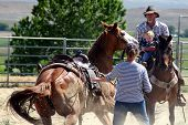 stock photo of teen pony tail  - horse trying to roll with rider on - JPG