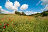 Delightful poppy field in summer with fluffy clouds in blue sky poster
