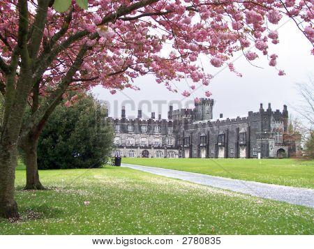Kilkenny Castle Ireland Spring Cherry Blossoms