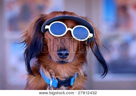Dachshund wearing a sun visor and sunglasses