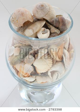 Seashells In Vase