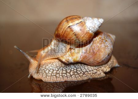 Two Wet Snails