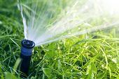 Lawn Water Sprinkler Spraying Water Over Lawn Green Fresh Grass In Garden Or Backyard On Hot Summer  poster