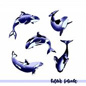 Vector Illustration Of Hand Drawn Killer Whale Group Isolated On White Backround. Perfect Design Ele poster
