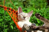 foto of minion  - relaxing cat - JPG