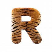 Tiger letter R - Capital 3d Feline fur font isolated on white background. This alphabet is perfect f poster