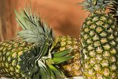 Pile Of Ripe Pineapples - Tropical Fruits - Ananas Comosus poster