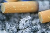 Macro Photo Of The Cigarette Butts Background. Royalty High-quality Stock Closeup Photo Image Of Dir poster