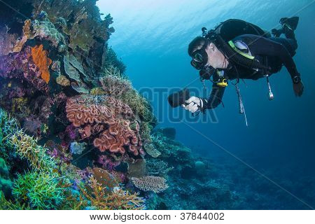 diver and colourful coral