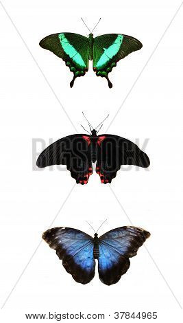 Three beautiful tropical butterfly