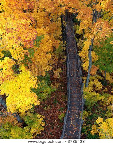 Wooden Path In Heaven
