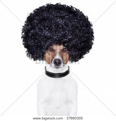 Afro Look Hair Dog Funny