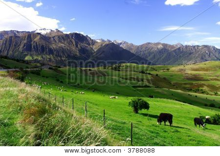 Country Life New Zealand