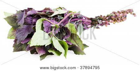 Cut Basil Isolated On The White Background