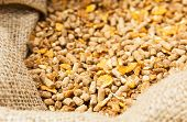 stock photo of cattle dog  - Compound Feed in sacks fodder for the animals - JPG