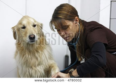 Taking A Dog's Blood Pressure