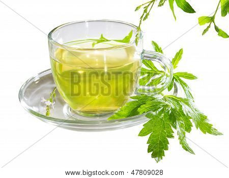 Cup Of Lemon Verbena Tea