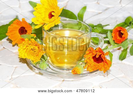 Pot Marigold Or Calendula Officinalus