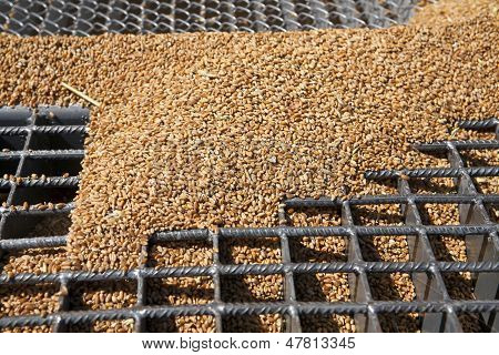 Wheat Grains On The Silo Grid
