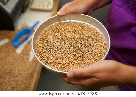 Measuring Of Moisture In Wheat Grains
