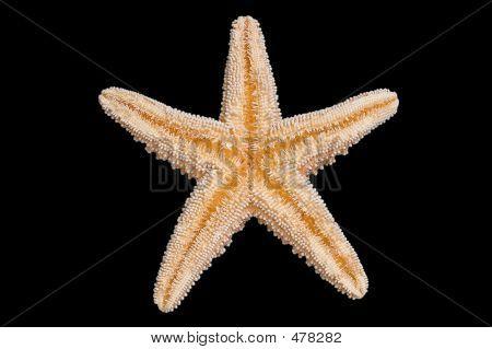 Starfish Bottom
