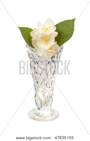 Jasmine In The Crystal Vase