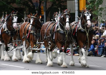 Clydesdale Horses Pulling Wagon