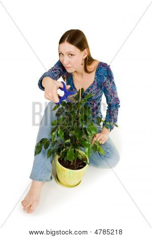 Woman Cutting Plant With Blue Scissors