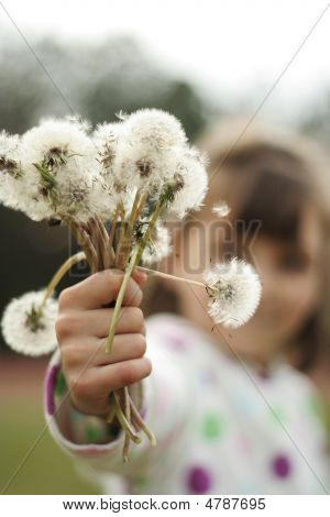 Dandelions For You