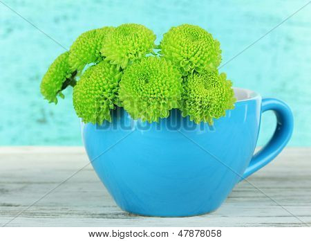 Beautiful green chrysanthemum in cup on table on blue background