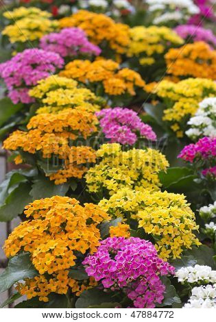 Bright Different Colored Flowers
