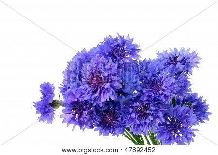 Blue Cornflower Bouquet